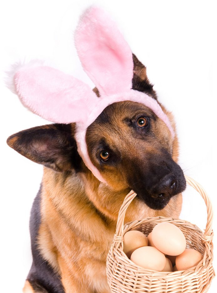 Easter Treats for Dogs...…..