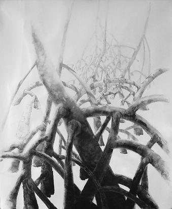 Stingray Bay mangrove series - Into the