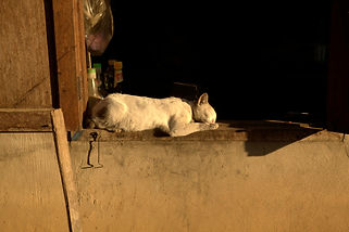 Jens Lichtenberger photography - Luang Prabang Liter's sleeping cat 2010
