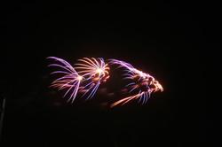 méduse stellaire