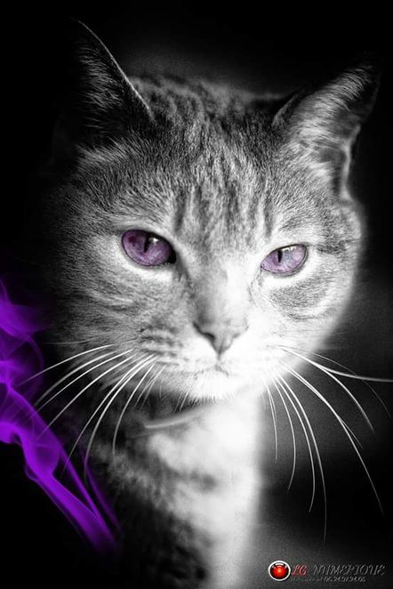 Chat purple