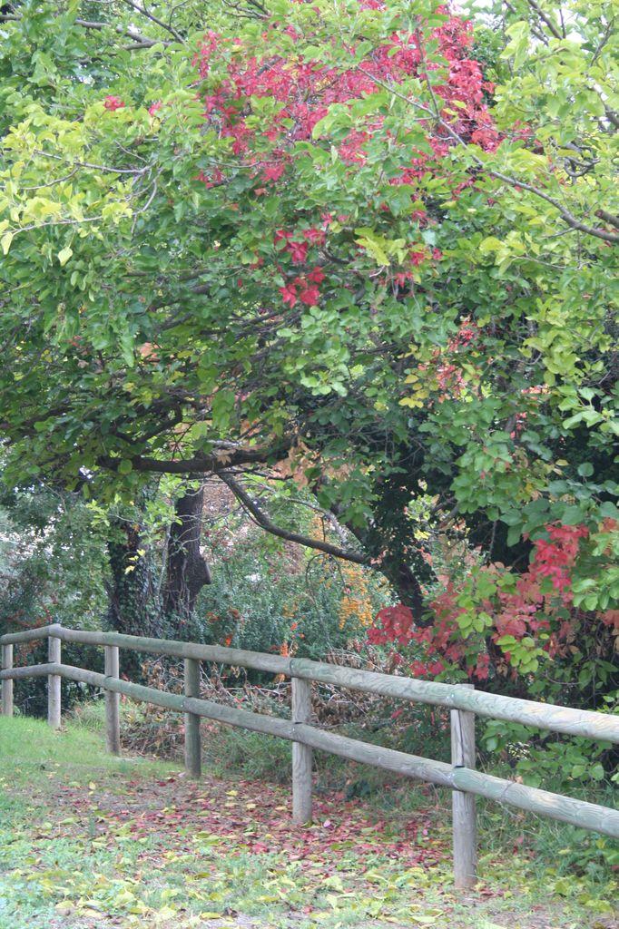 Jour d'automne 1