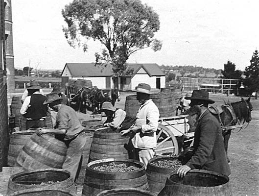 Mount Ophir Estate- 1900's Grape Receival
