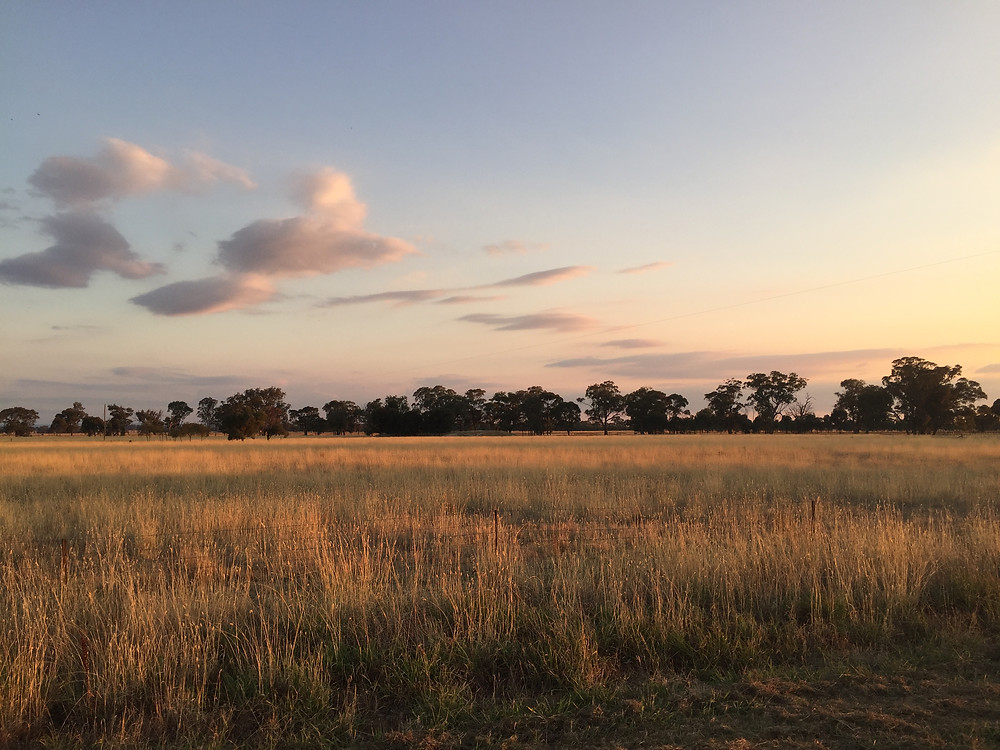 Mount Ophir Estate- The Landscape
