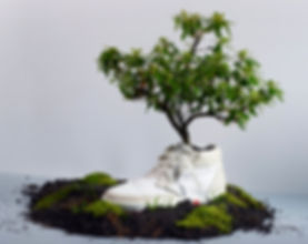 oat-biodegradable-shoes-photo1.jpg