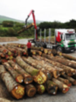 Oak delivery to our yard, local oak from snowdonia woodlands