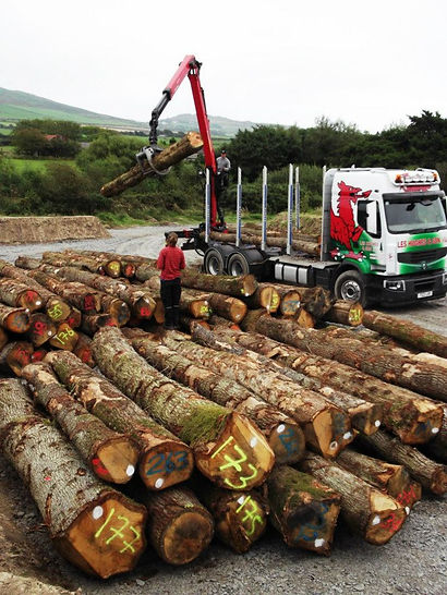 The wood arrives.jpg