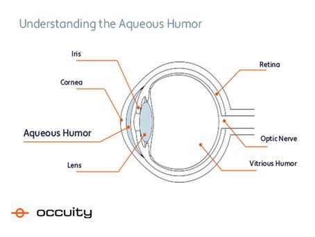 Understanding the aqueous humor