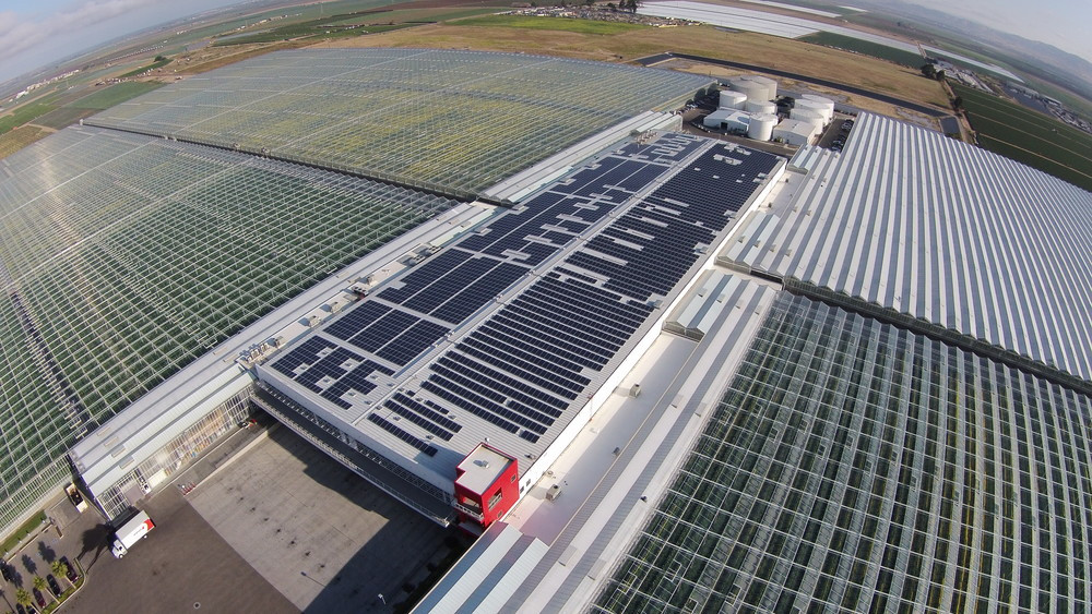 Windset Farms- Santa Maria, CA