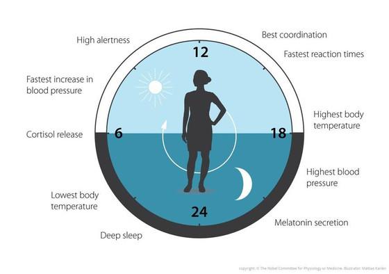 The Clock Gene