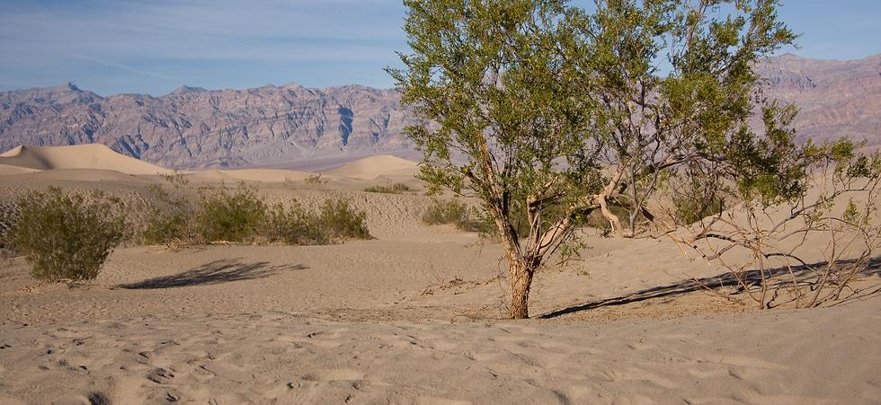053525891-death-valleys-sand-dunes_edite