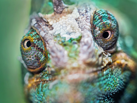 Are you a business chameleon?