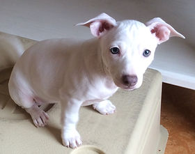 Betty (puppy from Jodie)