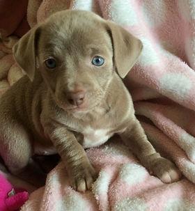 Essie (puppy from Jodie)