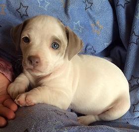 Spot (puppy from Jodie)