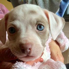 Dottie (puppy from Jodie)