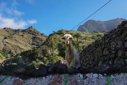 Jasper Cressey Spotted in La Gomera