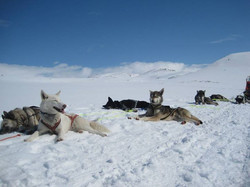 Dog Sledging 2015