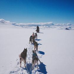 Dog sledging with Sharon.