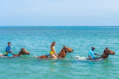 Ocean Outpost at Sandy Bay - Horseback R