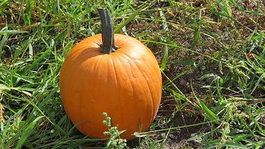 """Fall Festival, Pumpkins, Melons, Horse Boarding Keizer Oregon"""