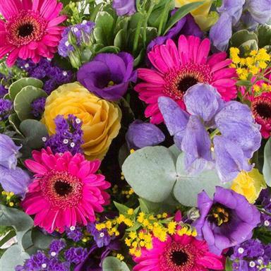 Oasis Spray in Florists Choice