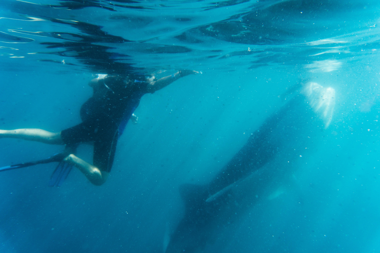 tiburón_ballena_14.jpg