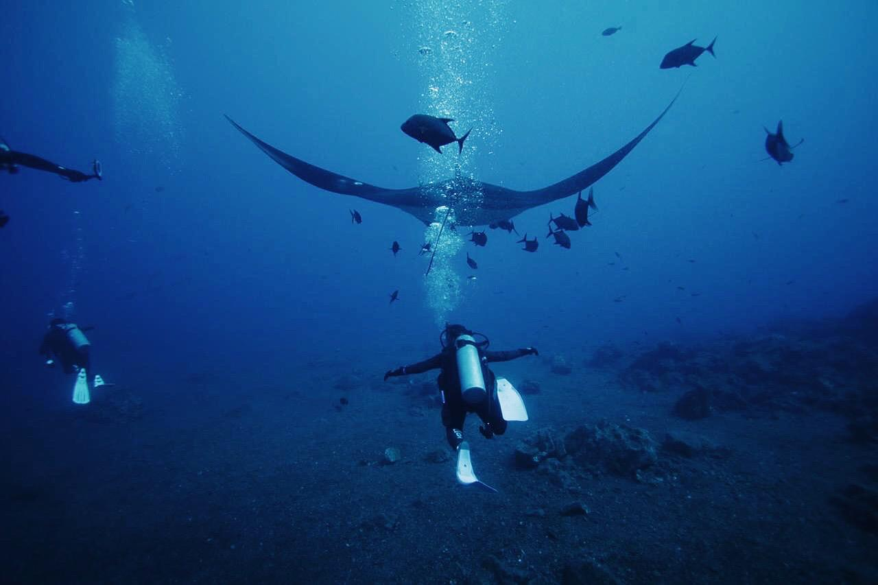 mantas-buceo-1.jpeg