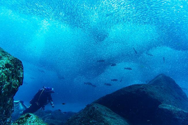 sardinas los islotes.jpg