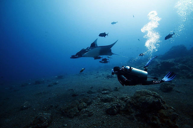 mantas-buceo-2.jpeg