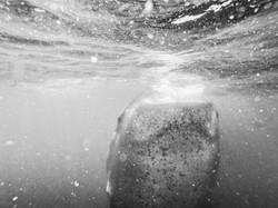 tiburón-1.jpg