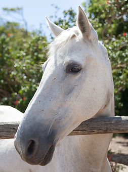horse 2.jpeg