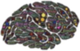 brain-744207_1920_edited.jpg