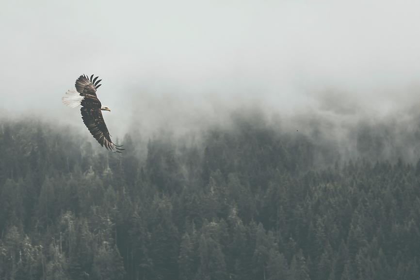 eagle%252520eye_edited_edited_edited.png