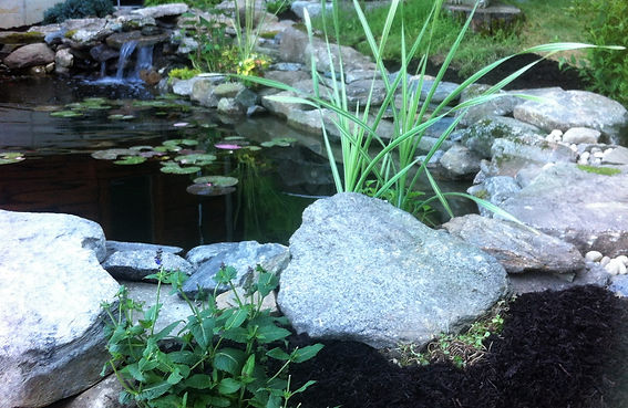 Water Gardening CT