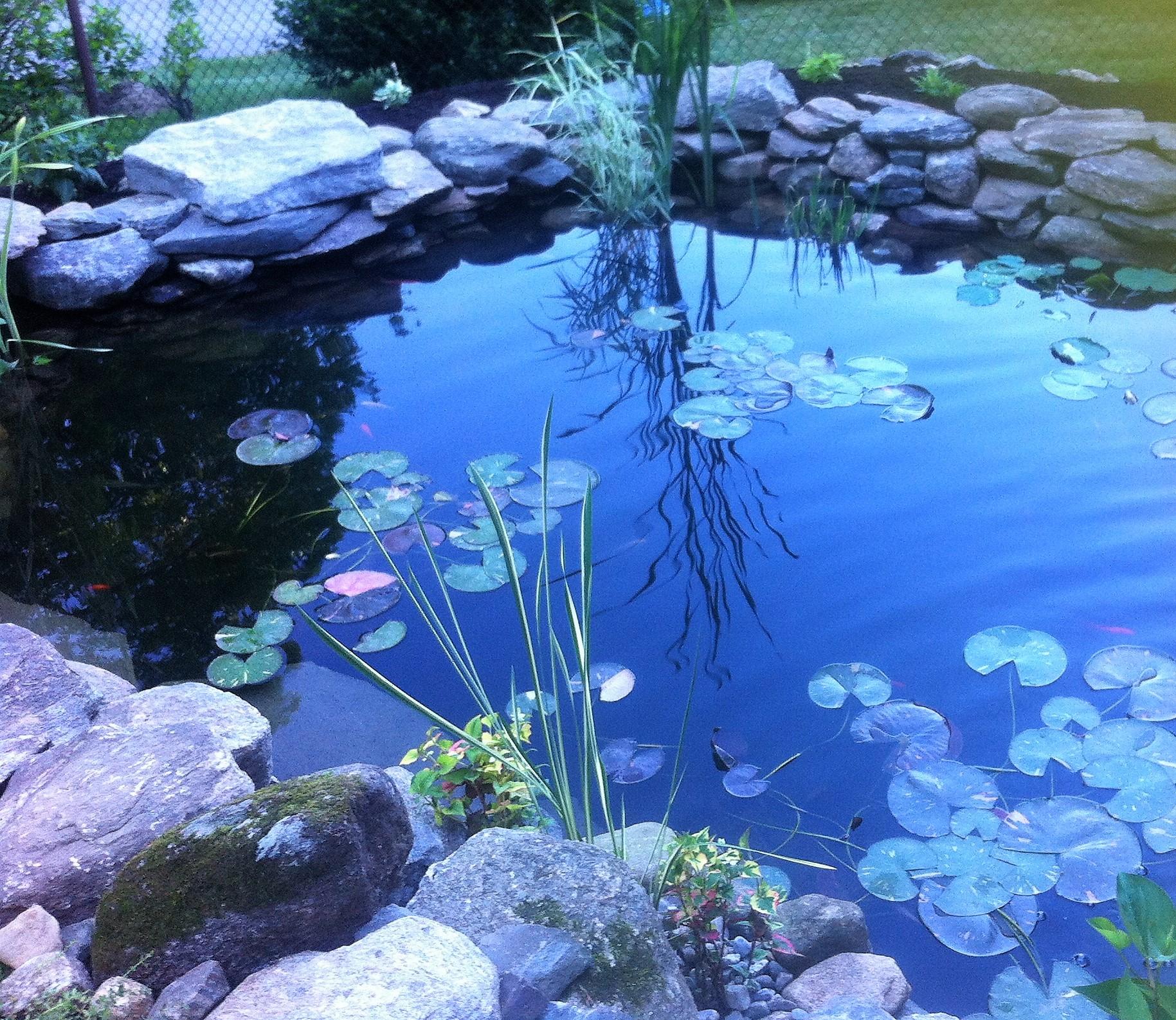 Decker Pond 3