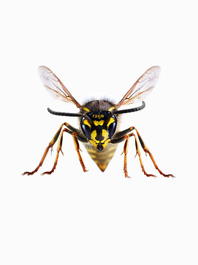 2019_04_17_Wasp_Preview.jpg