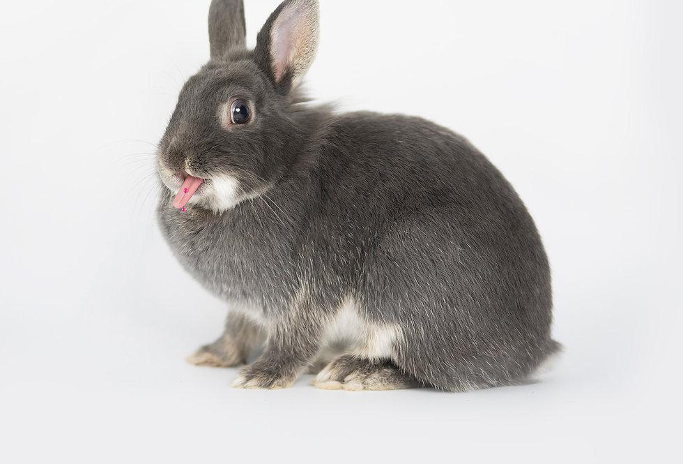 Slut Bunny