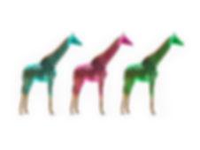 2019_04_03_Giraffe_40x30_Preview.jpg