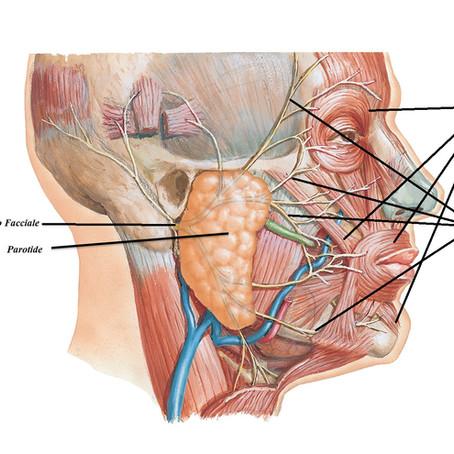 I tumori della Parotide