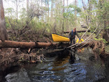 Chopping our way down the upper Sopchoppy River