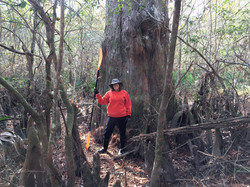 Susan and giant cypress
