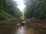 The Sipsey River:  Paddling at Ultra-Low Water is still a Great Hike