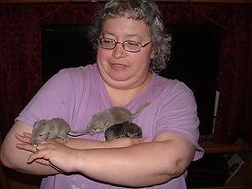 chinchilla cages chinchilla pet sitting