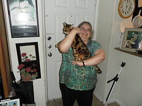 cat sitting, cat boarding,