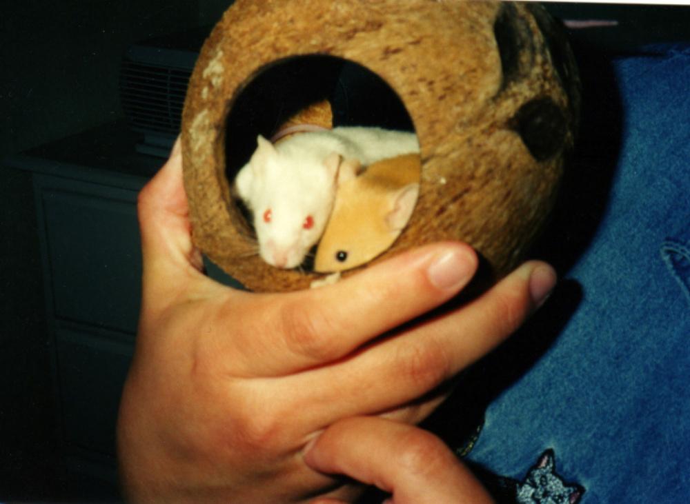 Coconut Mice