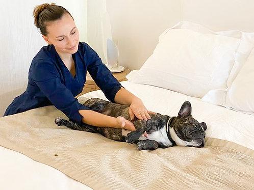 Kelly Epinat - Massage Chien