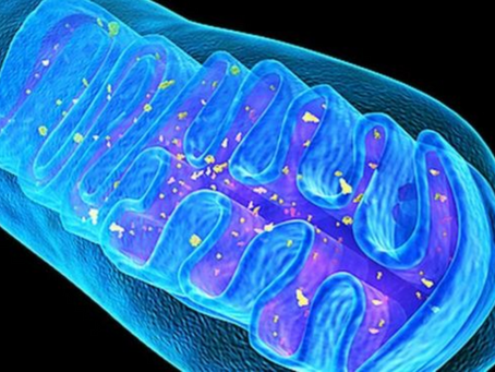 Mitochondrial  ⚗️ 🧬 Detox cleanse 🧼 🧫