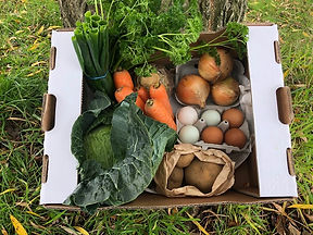 Big veg box
