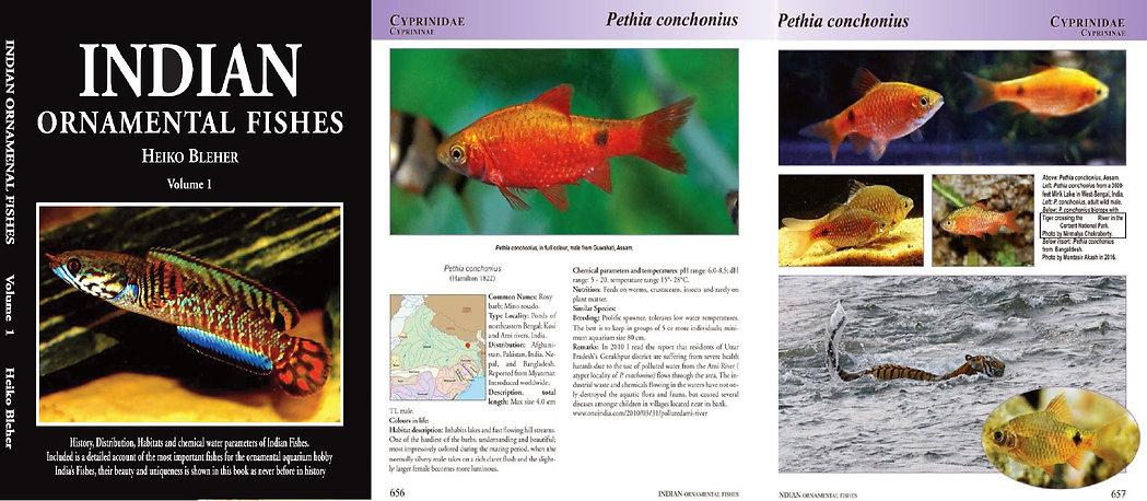 AquaPress.jpg